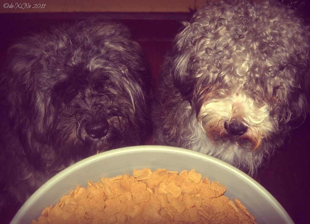 My Dogs praying over their dog food haha