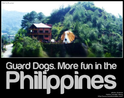 Lamtang Junction More fun in the Philippines! dog head in irisan baguio city http://www.morefunmaker.com/entry/34462/
