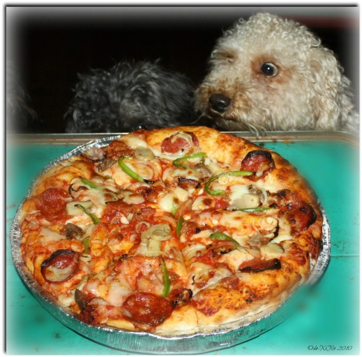 Bam Benny Deep Dish Pizza and my furry friends, wide eyed in the anticipation of getting a piece of it.