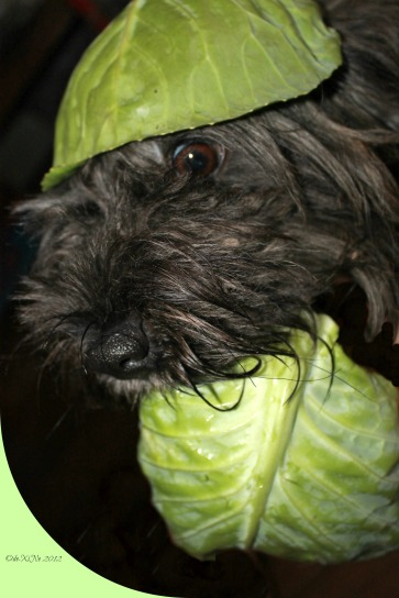 Cabbage Patch Dog