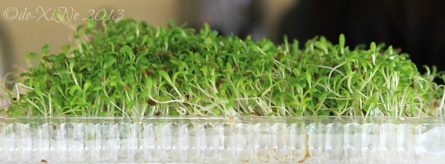 Cafe de Angelo alfalfa sprouts