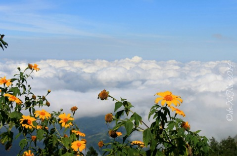 sea of clouds view from Metro Baguio Mount Kabuyao Santo Tomas