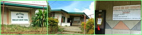 Baguio Dairy Farm aka Baguio Stock Farm
