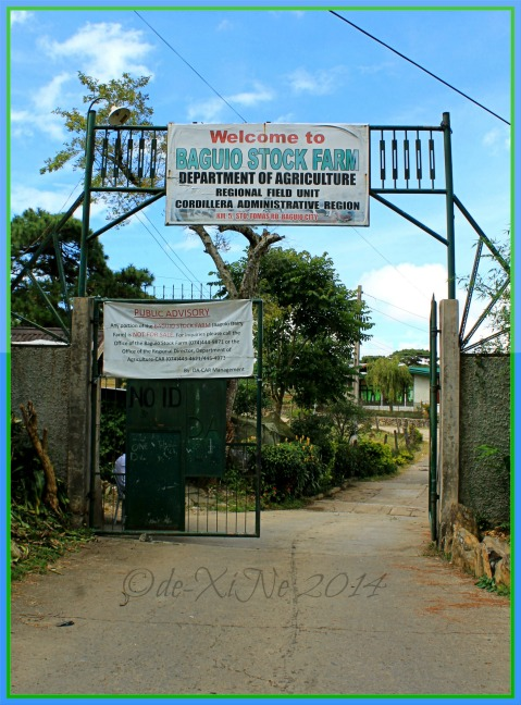 the gate to Baguio Dairy Farm aka Baguio Stock Farm