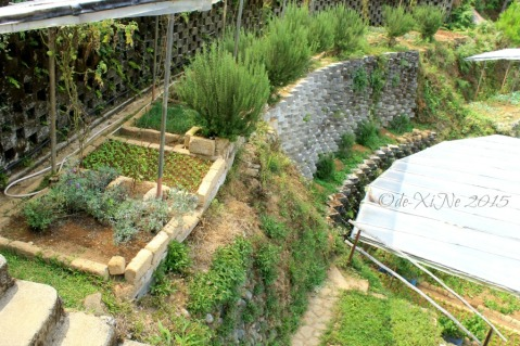metro Baguio Masters Garden garden of herbs and veggies