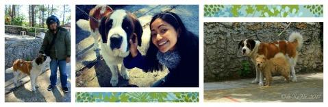 Baguio Mount/Chalet Tepeyac Lolita Bistro Cafe mastcot Lucy the St. Bernard dog.