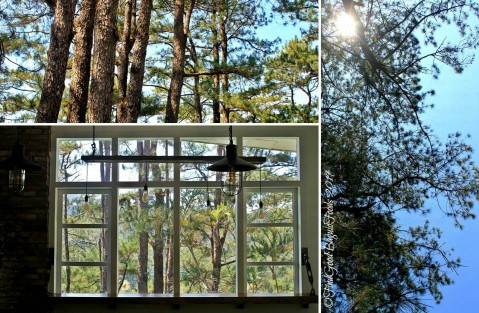 trees around Baguio Craft 1945 - Casa Marcos 2019